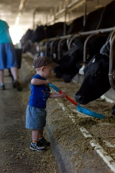 Everyone pitches in on Conant Acres #Dairy #Farm!