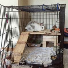 Bunny House in dog crate Diy Bunny Cage, Bunny Cages, Rabbit Cages, Dog Cages, House Rabbit, Pet Cage, Pet Bunny Rabbits, Pet Rabbit, Baby Bunnies