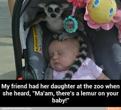 Ma'am, there's a lemur on your baby...
