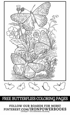 FREE Butterfly Coloring Pages for Girls   Please use freely for personal non-commercial use   Visit us for more butterflies and fairytale coloring pages @ironpowerbooks   For a complete collection of 50 beautiful pages of Butterflies visit http://www.amazon.com/Butterfly-Coloring-Pages-Butterflies-Adults/dp/1500501255