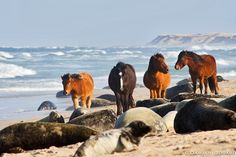 I've always wanted to go. Now that beautiful Sable Island is a National Park…