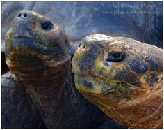 Day Four in the Galapagos: Santa Cruz and the Charles Darwin Research Center.