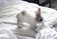 Adorable Lapereau tout Doux