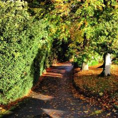 Beautiful #Craigatin #Autumn driveway picture from Les Johnson. www.craigatinhouse.co.uk