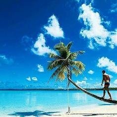 @Regrann_App from @unlimitedtahiti -  Tahiti is a lifestyle  Paradisiac photo by @corey_wilson via @tahitianvibes  Tag your best photos of #frenchpolynesia with #unlimitedtahiti  #polynesia #polynesie #tahiti #tahitianvibes #tahitilife #tahitibeach #tahititourisme #paradise #paradiseisland #moorea #borabora #turquoise #paradisebeach #oceania #pacific #pacificislands #paradiseisland #ig_oceania #pacificocean #loves_oceania  #paradiselost #paradiselove #beachlife #beachlove #beachlovers…