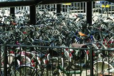 Dutch university appoints American as its professor of cycling