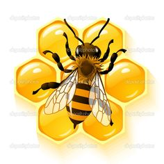 Honeycomb Clip Art | Bee on honeycombs background vector illustration
