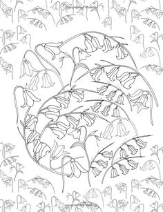 Flower Hunter Colouring Book Amazoncouk De Ann Black