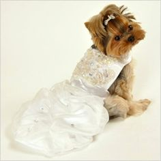 Top 5 wedding outfits for pets/ Our dog Becca is certainly getting dressed up!