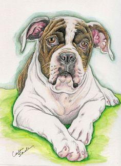 American Bulldog Dog Art Original Pencil Drawing 7 x 9 -Carla Smale-Bobbysbears #Realism