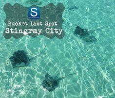 Bucket List Spot: Stingray City, Grand Cayman