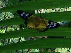 Papillon Banteay Srey Butterfly centre