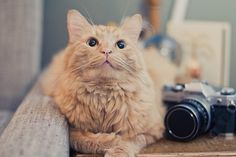 weasley with a canon ae-1