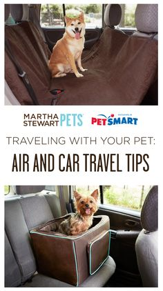 Traveling with your pet? Read our tips. #marthastewartpets #petsmart #petcare #pettips