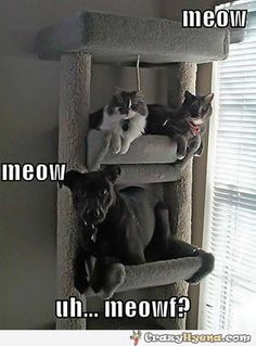 Dog and two cats. | Funny Pictures, Quotes, Photos, Pics, Images. Free Humorous Videos and Facebook Covers
