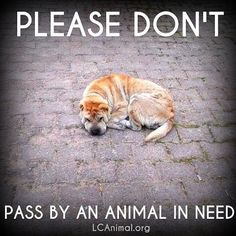 Please don't pass by an animal in need. #dogs #helpinganimals #animalwelfare #adoptdontshop:
