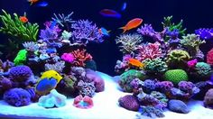 Get your corals to pop like this. Check out this light modification you need to know. Unique Fish Tanks, Cool Fish Tanks, Saltwater Fish Tanks, Saltwater Aquarium, Aquarium Fish Tank, Coral Reef Aquarium, Marine Aquarium, Nano Reef Tank, Reef Tanks