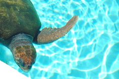 what to do in Ft. Walton Beach, Florida // visit the Emerald Coast #emeraldcoasting