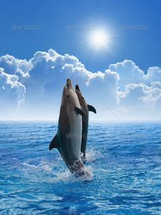 Dolphins jumping #photodune