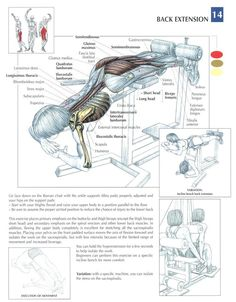 Back Extensions ~ Repinned by Crossed Irons Fitness