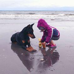Doberman Pinscher Dog, Doberman Dogs, Dobermans, Baby Dogs, Pet Dogs, Dog Cat, Animals For Kids, Cute Animals, Kids And Pets