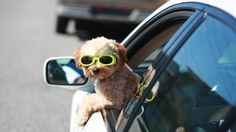 Valet Barking: FREE curbside pickup every Thursday between 7:30am - 9:00am.