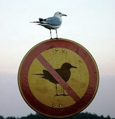 http://reality.usc.edu/assets/2011/08/bird-breaking-the-rules-250x260.png