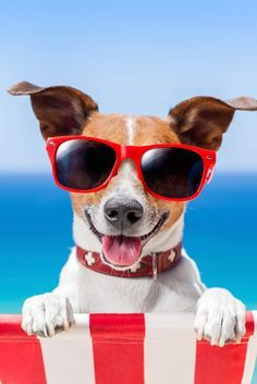  OFF your entire JAWS purchase today through August Use Promo Code at checkout. Animals And Pets, Cute Animals, Pet Grooming, Beach Fun, Summer Colors, American Women, Mans Best Friend, Color Themes, Dog Life