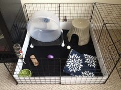 Hedgehog Cage!