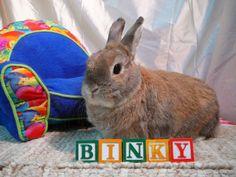 cute bunny picture idea