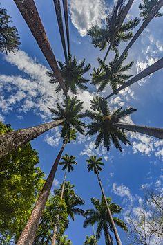 Palmen in Brasilien, Rio de Janeiro. Natur, Bäume. Foto: Felix Richter Medium Art, Clouds, Plants, Outdoor, Rio De Janeiro, Pictures, Brazil, Social Media, Nature