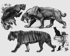 Cats, from 'Life Through the Ages' by Charles R. Knight