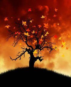 Μάθε για σένα σύμφωνα με την Κέλτικη Αστρολογία Aries, Celestial, Sunset, Outdoor, Autumn Fall, Iphone Wallpapers, Horoscope, Math Resources, Outdoors