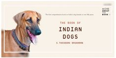 The Book of Indian Dogs is the first comprehensive book on Indian dog breeds in over fifty years. It features the twenty-five breeds that most breeders and dog fanciers agree constitute the country's canine heritage.  #dogexpress #dognews