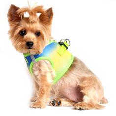 shop American River Choke-Free Dog Harness - Cobalt Sport Ombre