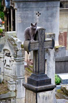 Grave-yard cat. by SeattleSandro, via Flickr