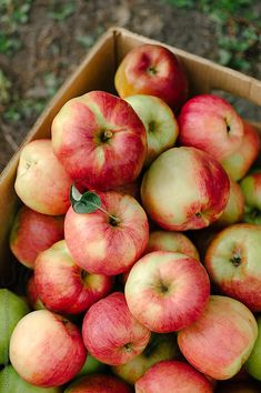 I Wellbeing. How To Go About Setting Your Daily Nutrition Goals. Nutrition is a complicated subject, but it Apple Harvest, Fall Harvest, Apple Tree, Red Apple, Fruit And Veg, Fresh Fruit, Fiber Rich Foods, Beautiful Fruits, Healthy Food Choices