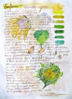 "Sunflower, 13 x 9 3/4"" image"