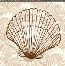 line drawings sea shells - Google Search