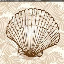 line drawings sea shells - Google Search