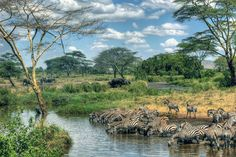 The Serengeti National Park in Tanzania. photo © Jonathan Wolfson.