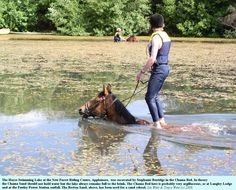 yupp im going to train bailey to do this! Girls Best Friend, Best Friends, New Forest, Southampton, Beautiful Horses, Farm Life, Under The Sea, Hampshire, Equestrian
