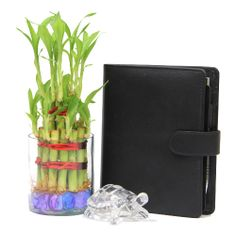 This fresh 2 layer lucky bamboo arrangement with a glass vase measuring 3.5x3 inches, a crystal turtle and a beautifully designed notepad with stylish leather cover to note down all your important assignments. This is a perfect hamper to gift to someone you love. http://www.giftsbymeeta.com/lucky-bamboo-n-notepad-gifts2236