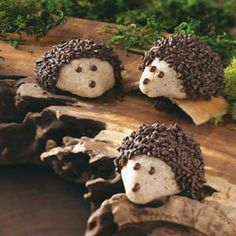 Chocolate-Pecan Hedgehog Cookies Recipe- Recipes  Unlike the real woodland creatures, these chocolate-coated hedgehogs dwell on snack plates and cookie trays. The little guys are fun to make and eat. —Pamela Goodlet, Washington Island, WI