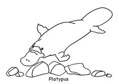 platypus animal colouring page for 2 5 year olds free download available from - Platypus Coloring Page