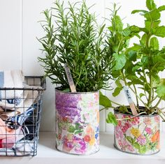 tin_can_herb_planters-2.jpg
