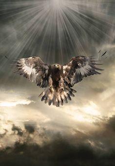 Eagle Back Tattoo, Eagle Shoulder Tattoo, Eagle Tattoos, Wolf Tattoos, Tatoos, Phoenix Tattoo Design, Wolf Tattoo Design, Skull Tattoo Design, Tattoo Designs