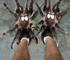 Tarantula slippers!!! Gotta order these for Halloween;-)  I bet the schnauzers will go crazy!!!  I need these for my daughter.:-)