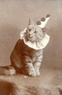 Pierrot the kitty - c. 1890s -you KNOW i want to put this on my Pagliacci board, but some how i think it should go to you!