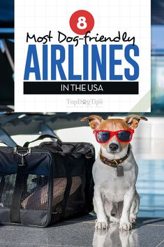 Traveling with your dog can be nerve wracking for you and your pet. The key to making the experience of flying with your dog run smoothly is preparation. The more prepared you are the easier the whole process will be. And of course, you need to travel wit Airline Travel, Dog Travel, Best Dog Names, Best Dogs, Dogs On Planes, Flying Dog, Flying With Dogs, Emotional Support Animal, Dog Collar Tags